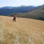 Iarba Inalta in muntii Ciucas