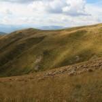 Oi pe muntii Ciucas