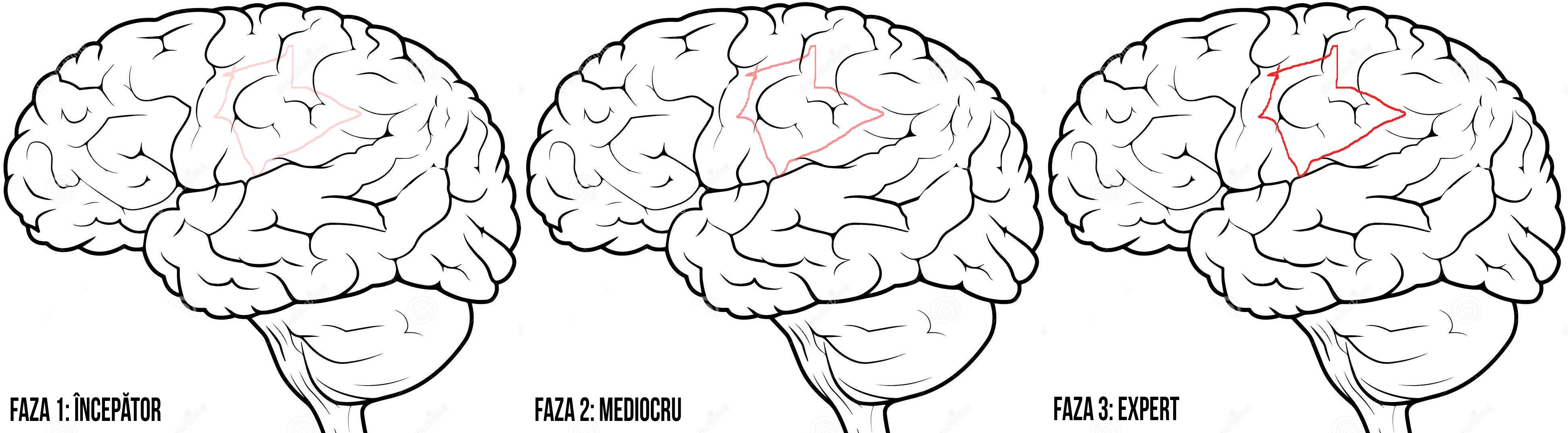 Creierul si alergarea fazele