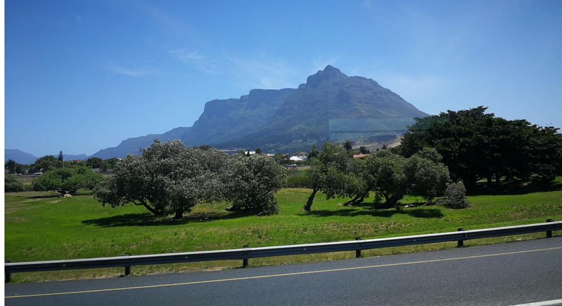 Saracia Africa de Sud