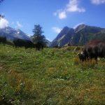 Tour du Mont Blanc - Ziua 1 - La Bovine
